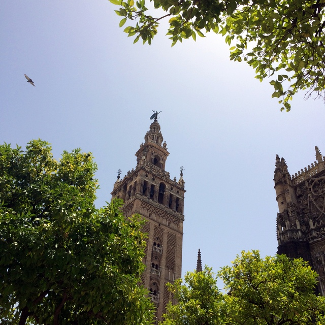 cathedral giralda