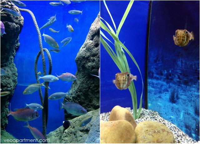 seville aquarium (2)